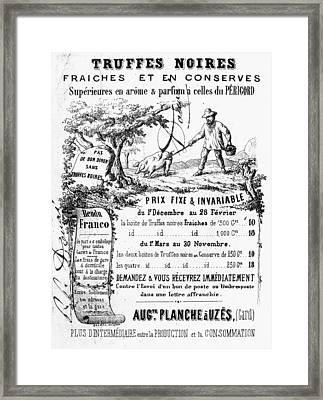 Truffles, 19th Century Framed Print by Granger