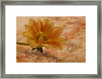 Truly Amazing  Framed Print by Sandra Foster