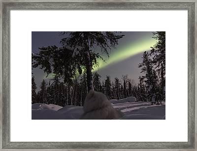 Truly Northern Framed Print by Valerie Pond