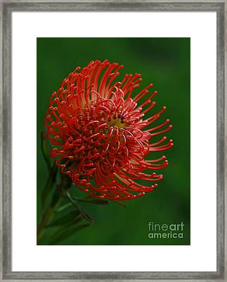 Truly Spontaneous Framed Print