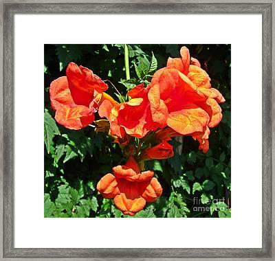 Trumpet Flower Orange Quartet Framed Print