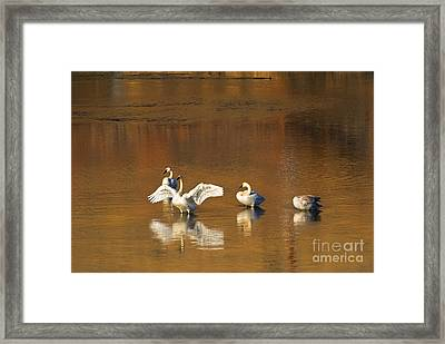 Trumpeter Ballet Framed Print by Mike  Dawson