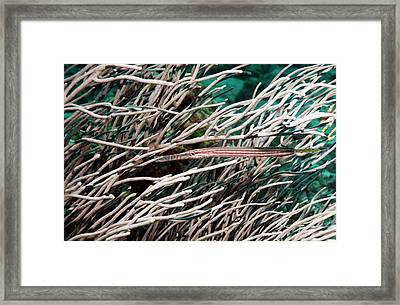 Trumpetfish In Soft Coral Framed Print by Georgette Douwma