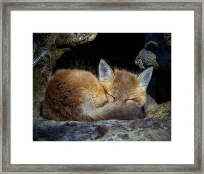 Fox Kit - Trust Framed Print