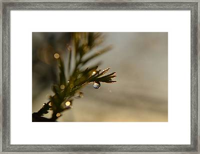 Trust Your Story Framed Print by Melanie Moraga