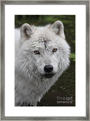 Trusting Framed Print