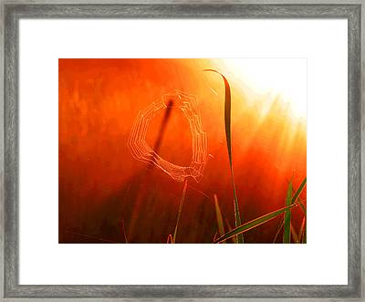 The Spider's Web In Golden Sunlight Framed Print