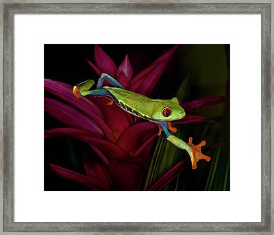 Trying To Get Away Framed Print