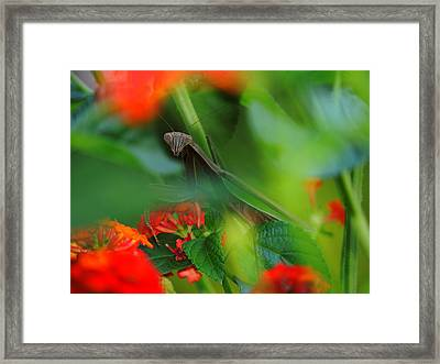 Trying To Hide Praying Mantis Framed Print by Raymond Salani III