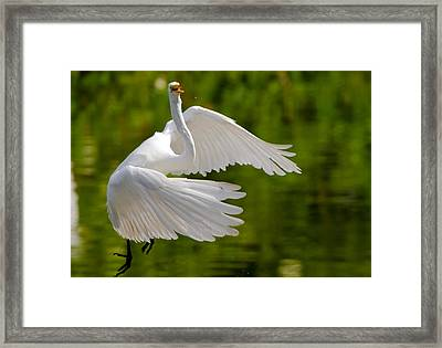 Trying To Take Off Framed Print