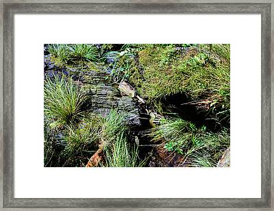 Tsongas Beauty 2 Framed Print