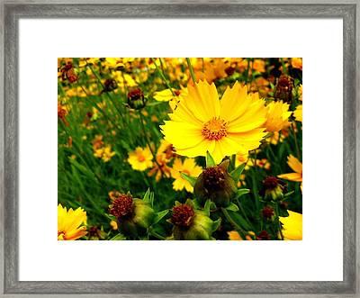 Tu Belleza Me Cautiva... Framed Print