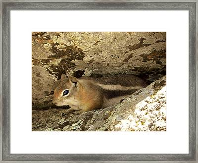 Tucked Away Framed Print by Michelle Bentham