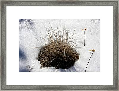 Tucked In The Snow Framed Print by Jennifer Muller
