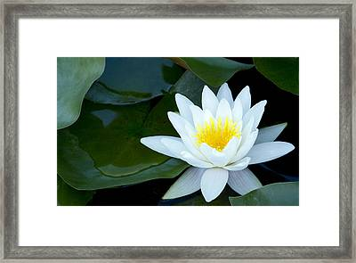 Tucked Framed Print by Rebecca Cozart