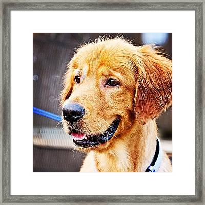 Tucker Framed Print