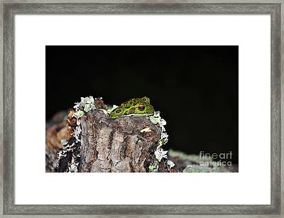 Tuckered Tree Frog Framed Print by Al Powell Photography USA