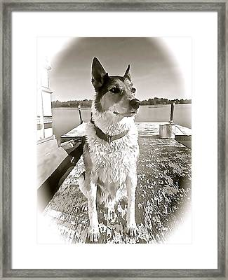 Tucker's Tuesday Framed Print by Danielle  Broussard