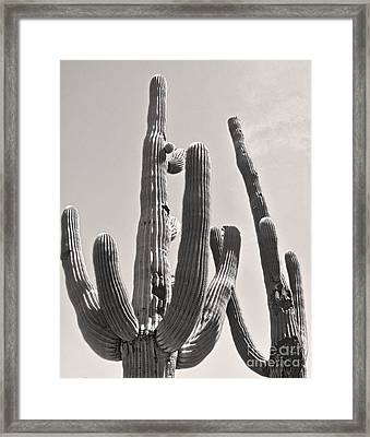 Tucson Arizona Sepia Catus Framed Print by Gregory Dyer