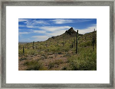 Tucson Catci Framed Print by Scott Cunningham