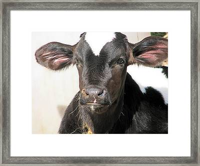 Tuf Guy Framed Print by Victoria Sheldon