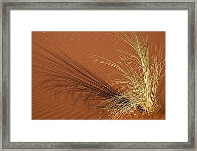 Tuft Of Grass Forms Shadow On Sand Framed Print by Jaynes Gallery