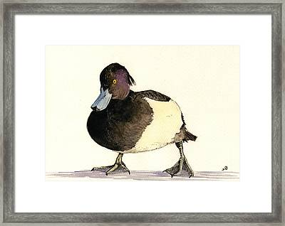 Tufted Duck Framed Print