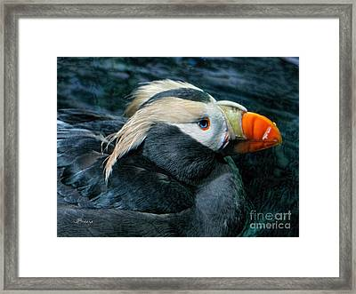 Tufted Puffin Profile Framed Print