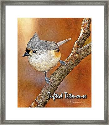 Framed Print featuring the photograph Tufted Titmouse by A Gurmankin
