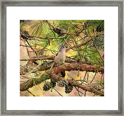 Tufted Titmouse Framed Print by Deena Stoddard