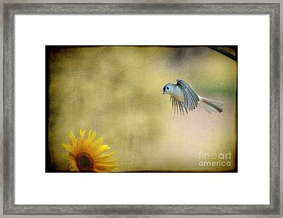 Tufted Titmouse Flying Over Flower Framed Print by Dan Friend