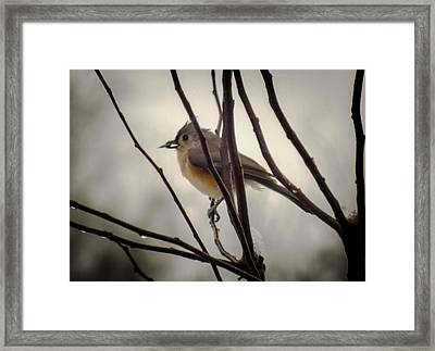 Tufted Titmouse Framed Print by Karen Wiles