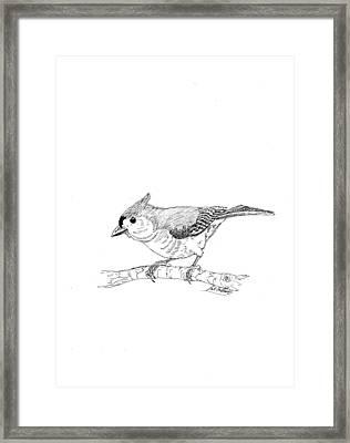 Tufted Titmouse Framed Print by Lee Halbrook