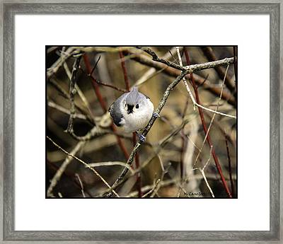 Tufted Titmouse On The Watch Framed Print
