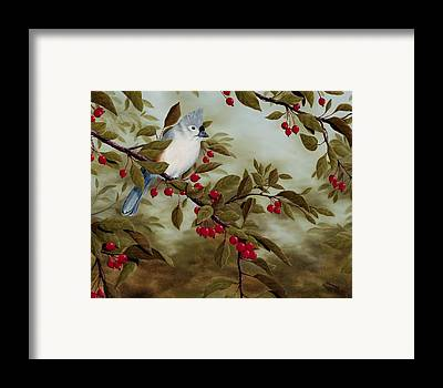 Tufted Titmouse Framed Prints