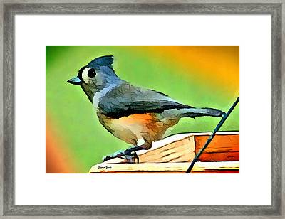 Tufted Titmouse Framed Print by Stephen Younts