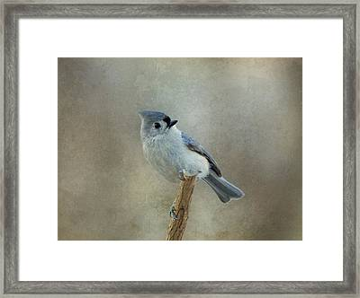 Tufted Titmouse Watching Framed Print by Sandy Keeton
