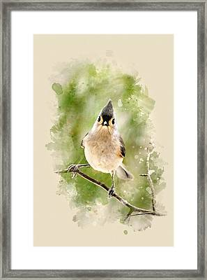 Tufted Titmouse - Watercolor Art Framed Print by Christina Rollo
