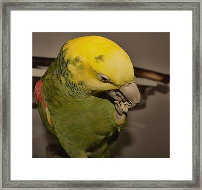 Framed Print featuring the photograph Tuke by Melissa Messick