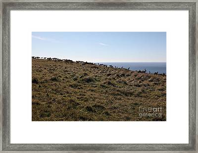Tules Elks Of Tomales Bay California - 5d21276 Framed Print by Wingsdomain Art and Photography