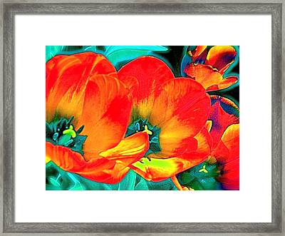 Framed Print featuring the photograph Tulip 1 by Pamela Cooper