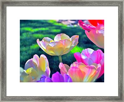 Tulip 21 Framed Print