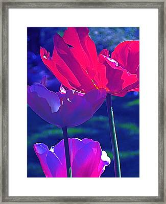 Framed Print featuring the photograph Tulip 3 by Pamela Cooper