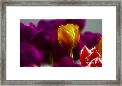 Tulip-6983 Framed Print by Gary Gingrich Galleries