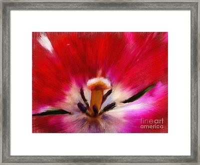 Tulip 7 Framed Print