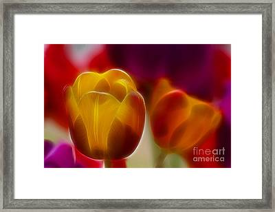 Tulip-7016-fractal Framed Print by Gary Gingrich Galleries
