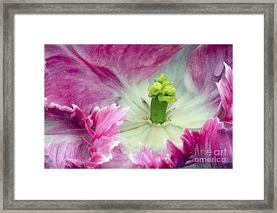 Tulip - 853 Framed Print by Paul W Faust -  Impressions of Light