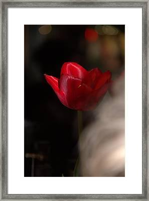 Tulip Framed Print by A K Dayton
