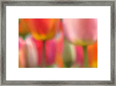 Tulip Abstract Framed Print by Angela Davies