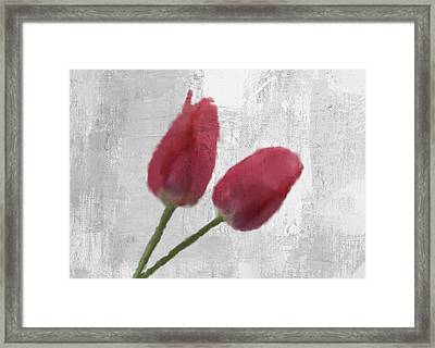 Tulip Framed Print by Aged Pixel